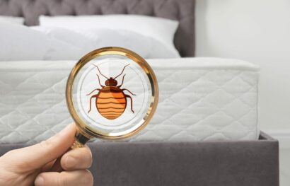 Bed Bugs in a Hotel