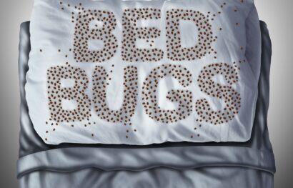 Bed Bugs Feeding