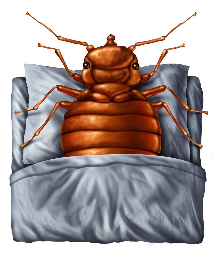 Bed Bug Heaters